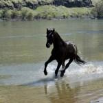 Appaloosa Horses For Sale Dalosto Farms Llc
