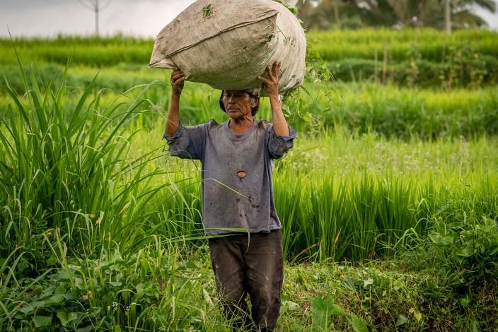 Balinese Farmer