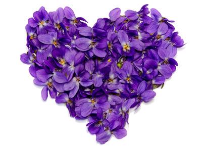 dalybeauty violet perfumes