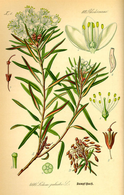 dalybeauty Lise Watier Sublimessence labrador tea extract