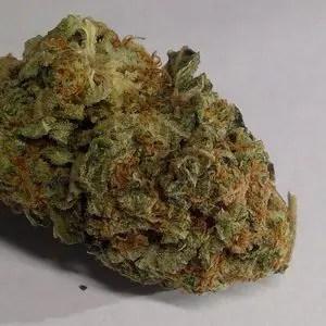 木瓜OG大麻(Papaya OG)