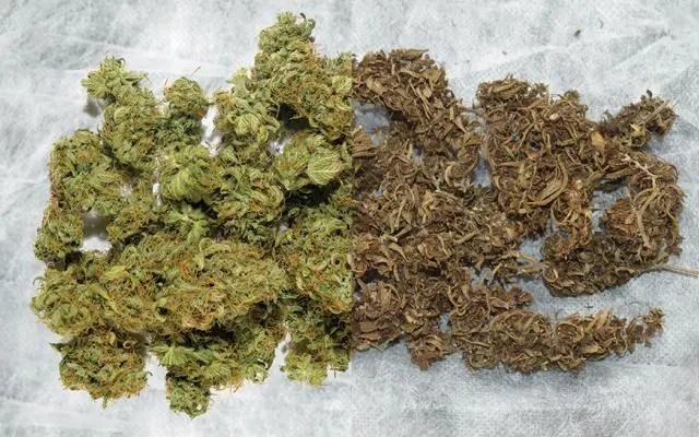 当我刚开始种大麻的时候,最希望别人告诉我的9件事情——从零单种(49)