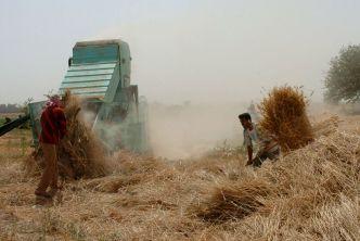 مناقصة لاستيراد 200 ألف طن من القمح الروسي اللين .