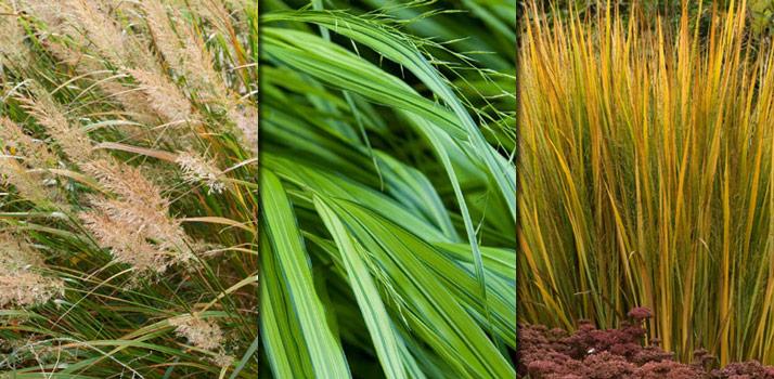 Grasses_350