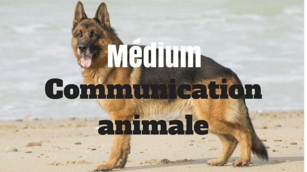 berger allemand communication animale
