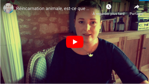 Réincarnation animale video Youtube