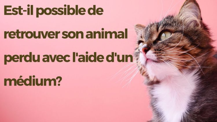 chat perdu médium retrouver un animal perdu