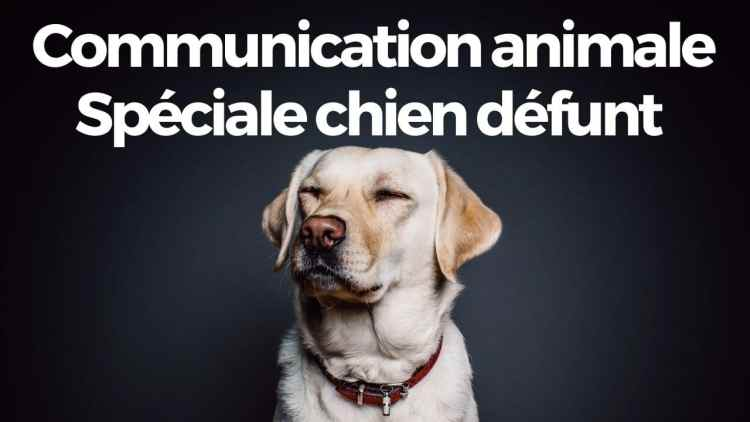 communication animale par dame-cande