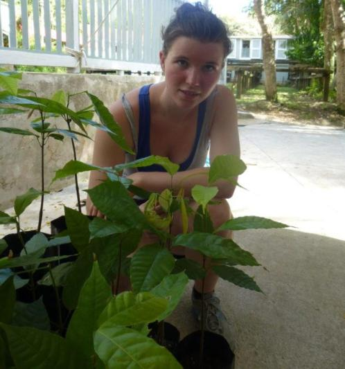 puerto rico ponce baby cacao trees and me