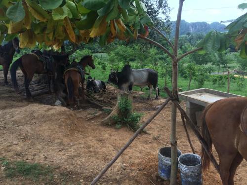 Discovering Cigars on Horseback in Viñales Cuba horses