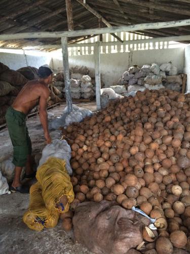 Brigada Deshidratadora de coco el pino baracoa cuba guide worker