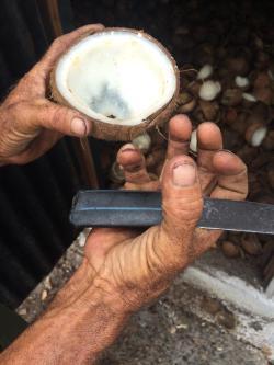 baracoa cuba guide worker dehydrator hands