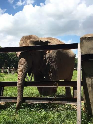 Amar the Elephant