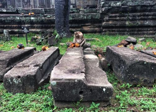 Angkor Wat Path Cambodia Siem Reap Temple Monkey Eating Coconut Pre Rup