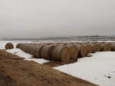 Fields near Ulva, April 2