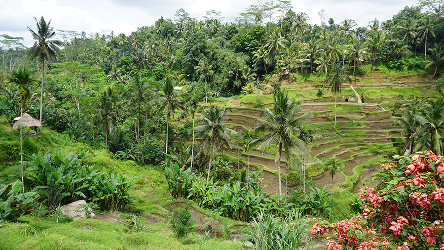 Tegallalang How to Live in Bali
