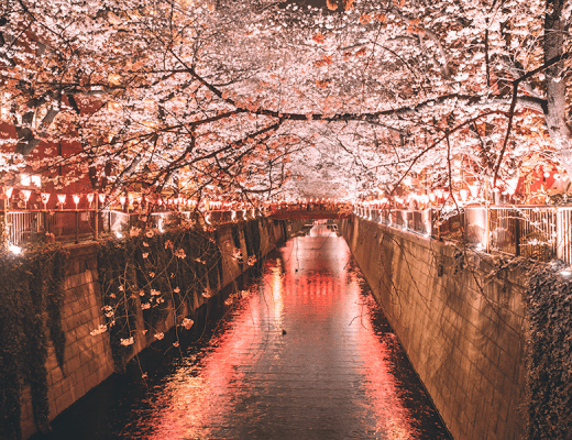 5 Best Places to Experience Tokyo's Magical Sakura Blossoms