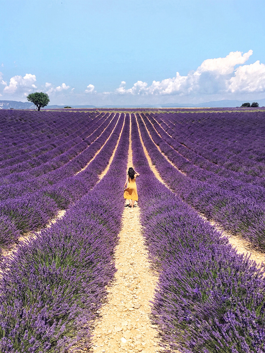 Seeking Lavender in Provence: A Photo Diary