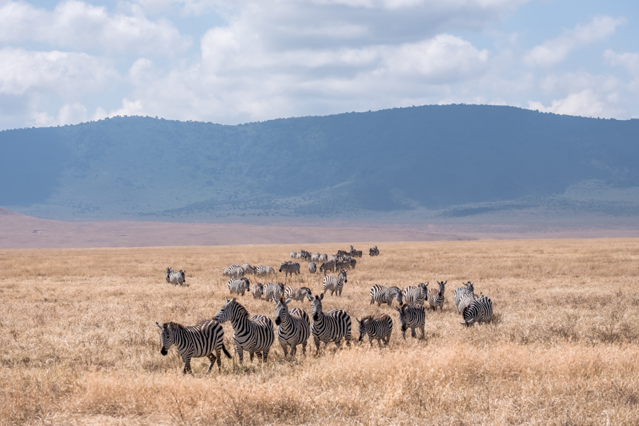 A Beginner's Guide to Tanzania