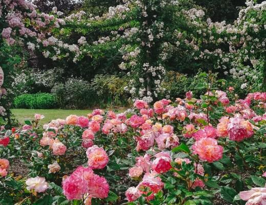 Five Beautiful Botanical Gardens Around The World