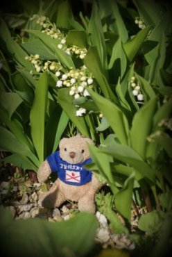 Teddy 18/52 2013