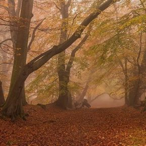 Autumn Ashridge Chiltern Woodland Landscape Photography