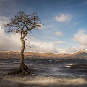 Loch Lomond Tree Milarrochy Bay Scotland Landscape Photography