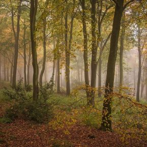Wendover Woods Chiltern Woodland Autumn Landscape Photography