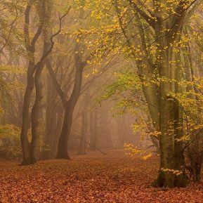 Chiltern Woodland Autumn Landscape Photography