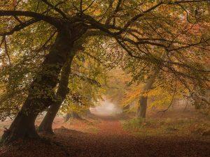 Ashridge Chiltern Woodland Autumn Landscape Photography