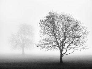 misty trees Landscape Photography