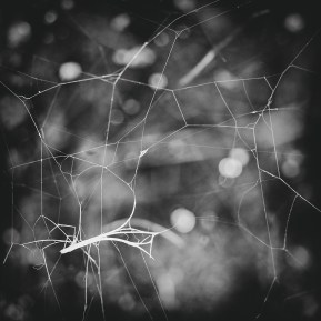 Entangled, fine art photography Cobwebs, web, spiders