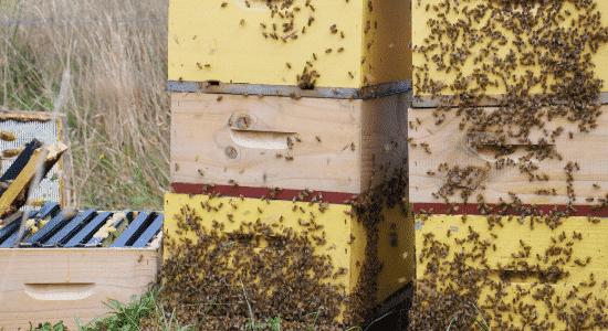 ruche-secrets-de-miel