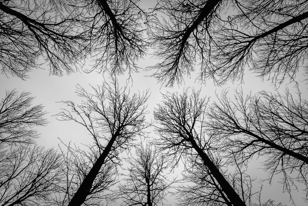Looking up at the tree line