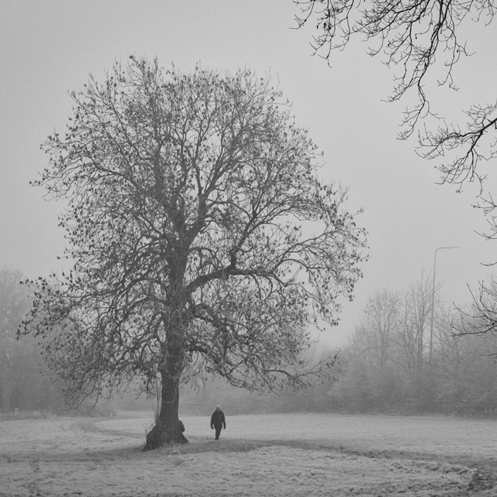 A man walks past a tree in the fog