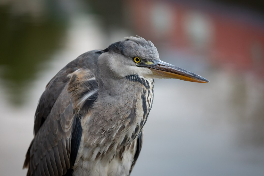 A close up of the heron