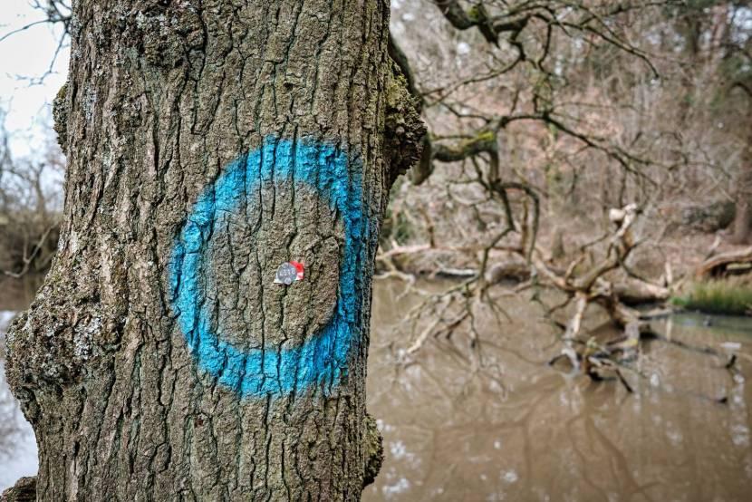 Sixteen Acre Wood