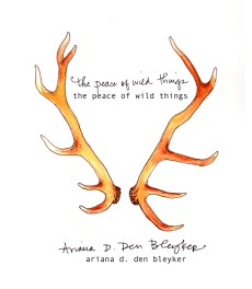 The Peace of Wild Things (poetry by Ariana D. Den Bleyker) cover design w/ Jonathan