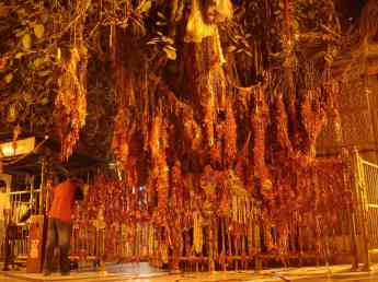 The enormous tree at the Devi temple in Chintpurni