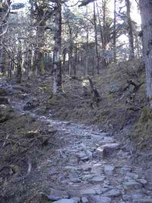 The rocky forest trail around Langtang