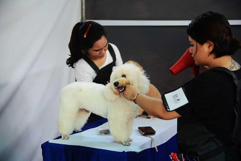 lễ hội cún cưng Đầm Sen