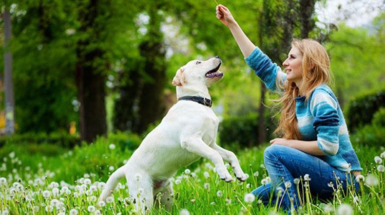 Какво не знаем за домашния любимец - кучето 4