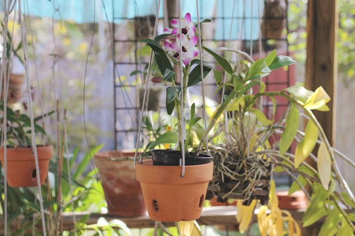 Отглеждане на орхидеи у дома 2