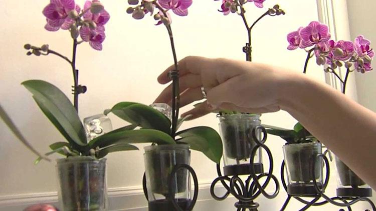 Отглеждане на орхидеи у дома 3