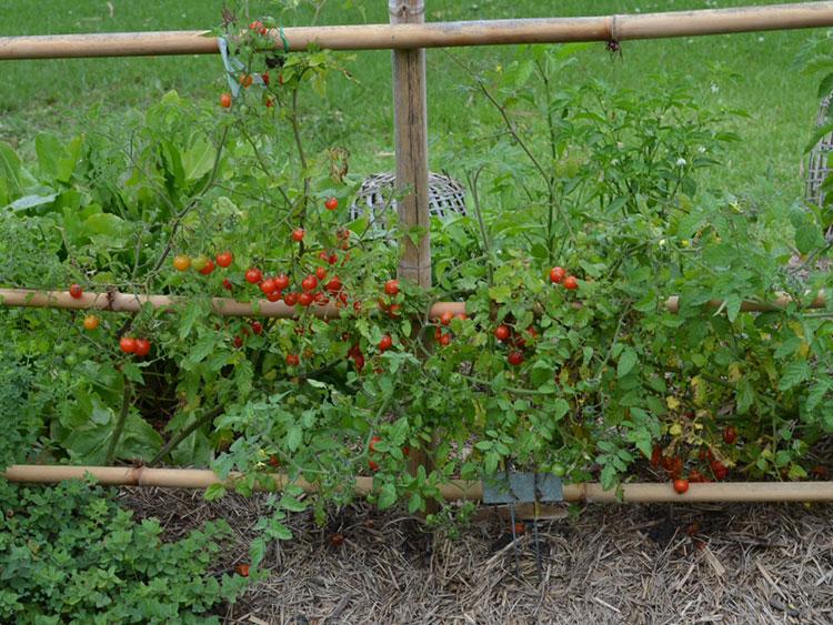 Отглеждане на чери домати у дома 5