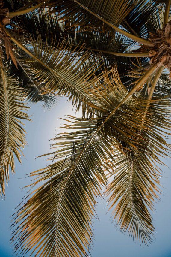 Where to Stay in Cancun: Occidental Costa Cancun Mexico All Inclusive Resort   Dana Berez Travel Guide