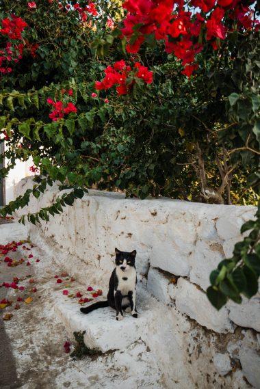 Santorini Travel Guide Beyond Oia | Top things to do in Santorini | Dana Berez Greece Travel Guide