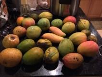 sfloridamangoes