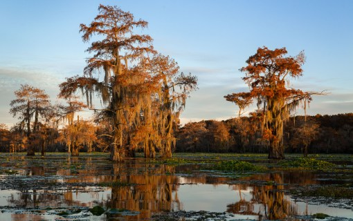 The Bayou at Sunset