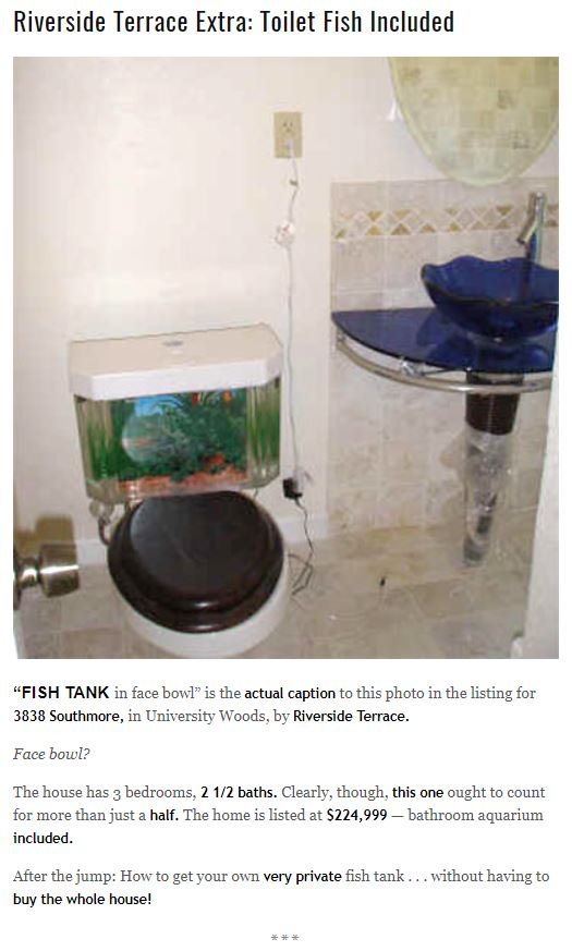 swamplot, fishnflush, fish toilet, riverside terrace